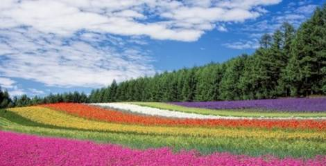 hokkaido-field-of-flowers-and-forest
