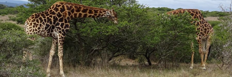 blog afrika amakhala wildreservaat in zuid afrika van verrein amakhala wildreservaat