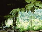 Bouwsteen 4 Grotten In Tropisch Regenwoud