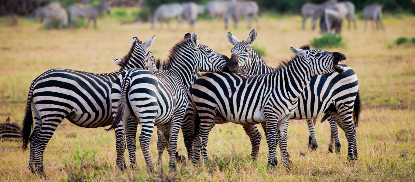 rondreis zuid afrika, wildparken en bergen bij van verreKosten Safari Zuid Afrika.htm #13