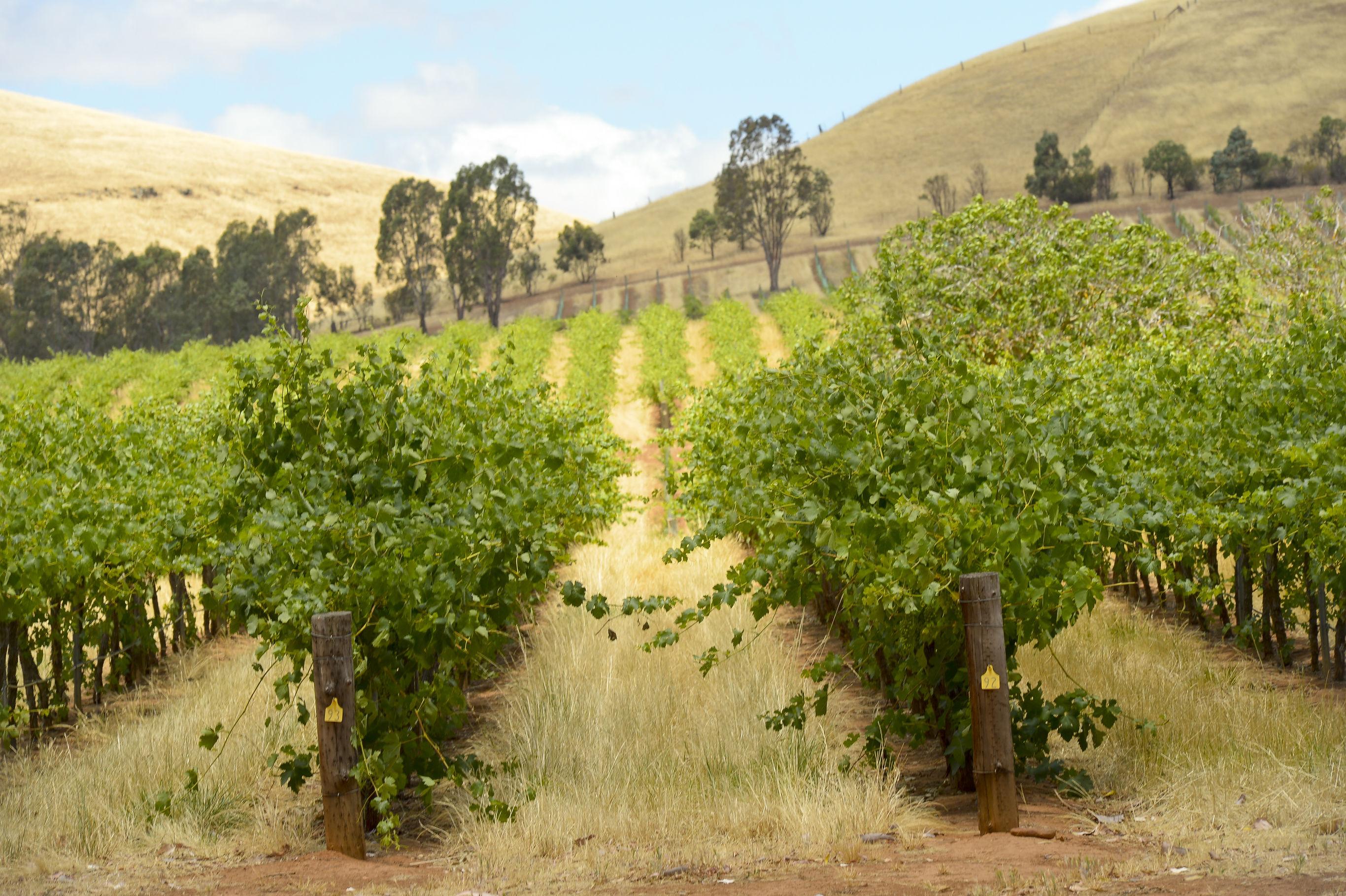 Sfeerimpressie Autorondreis Australië: Outback, Wine & Wildlife