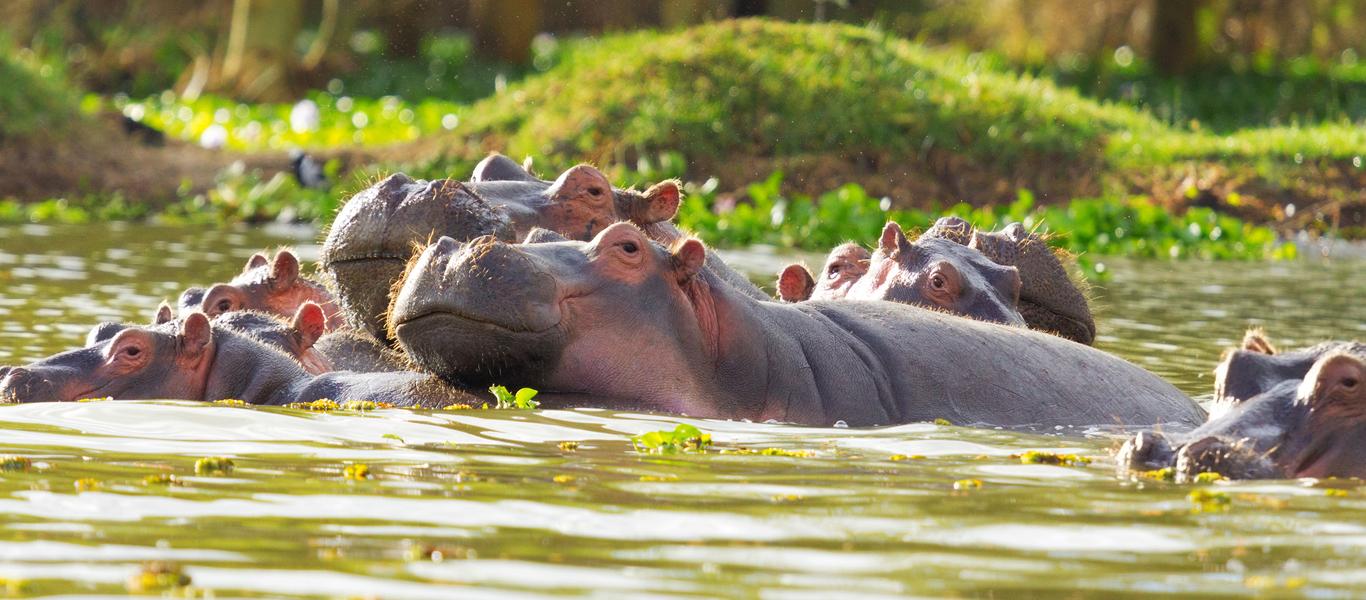 rondreis zuid afrika, krugerpark en drakensbergen bij van verreVerblijf Krugerpark.htm #20