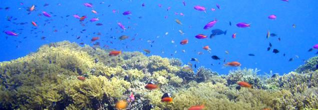 Huwelijksreissu-onderwater.?height=220&;width=635