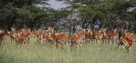 Sfeerimpressie Rondreis Migratie in de Masai Mara