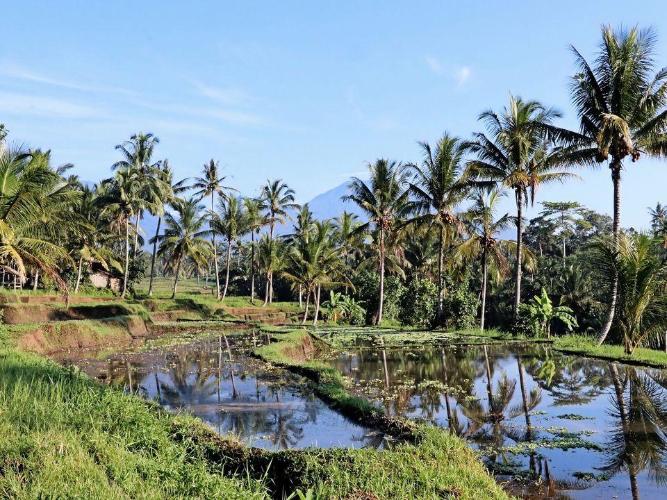 Rondreis Indonesië: Groen Java en Bali