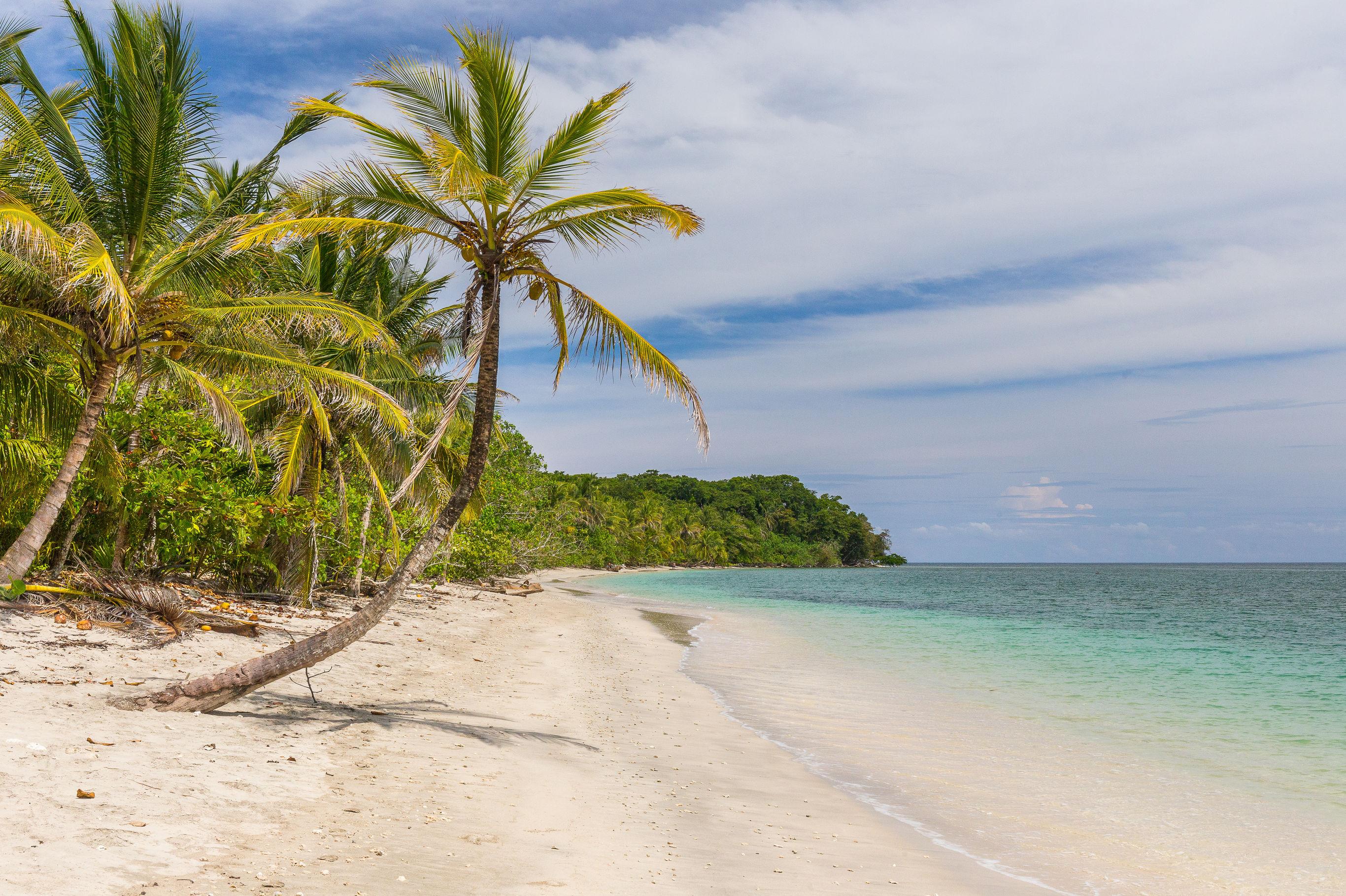 Cahuita-strand-palmboom_2_344473 Toerisme Europa - Toerisme Europa