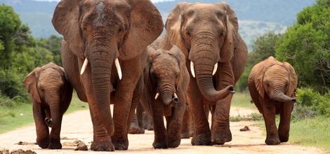 Rondreis Zuid-Afrika: Safari Krugerpark en Zululand