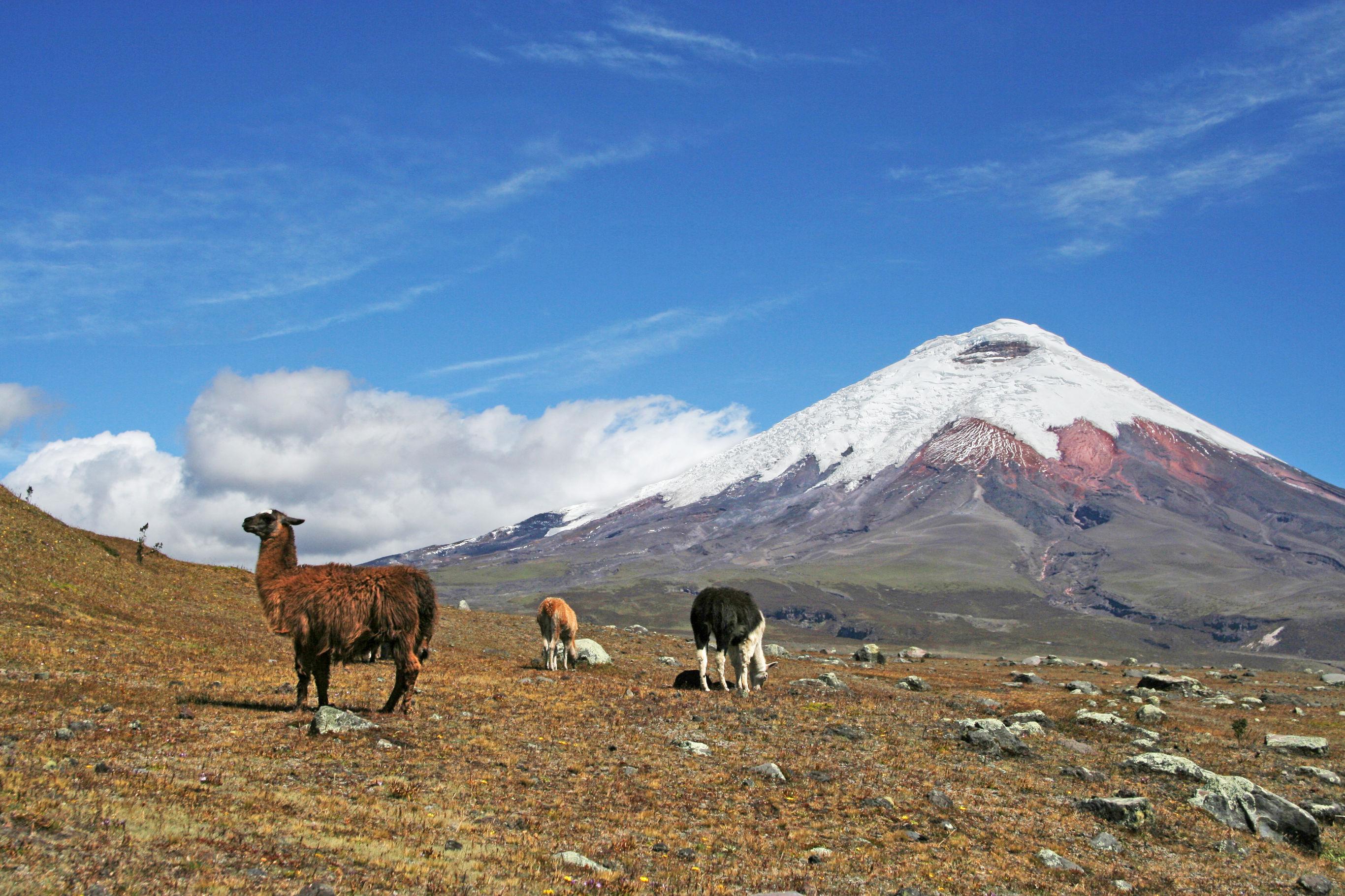 Sfeerimpressie Rondreis Ecuador: Avenue der vulkanen