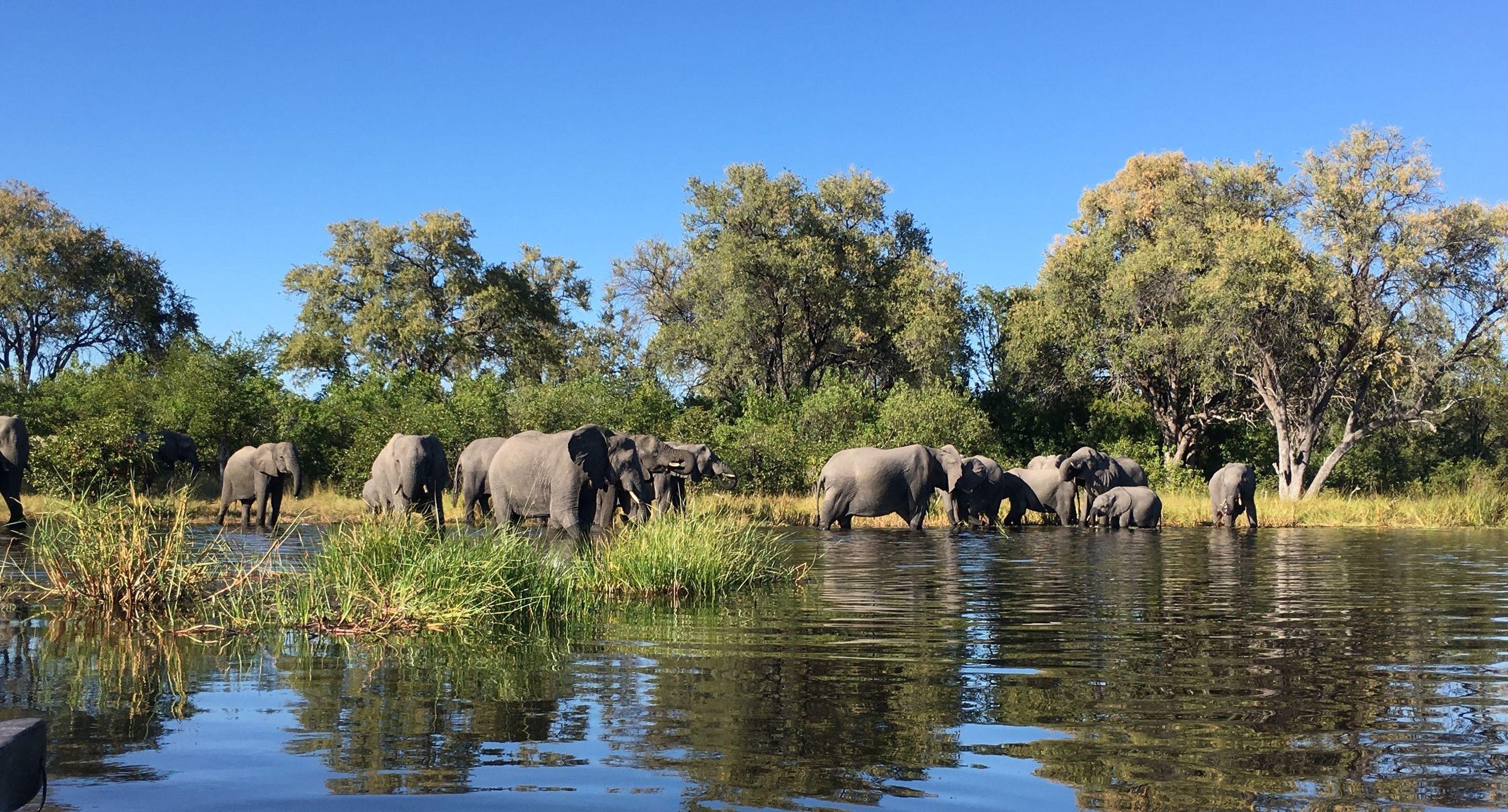 Rondreis Botswana Mobile Safari Botswana