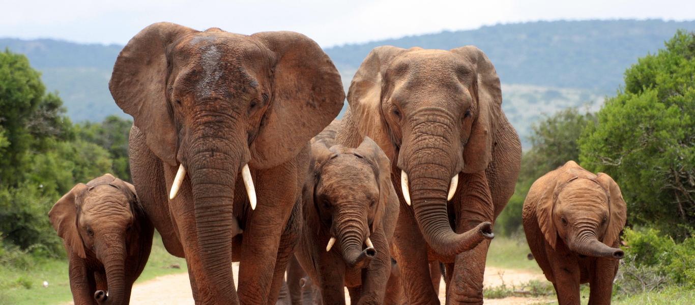 rondreis zuid afrika, kurgerpark en zululand bij van verreRondreis Krugerpark.htm #10