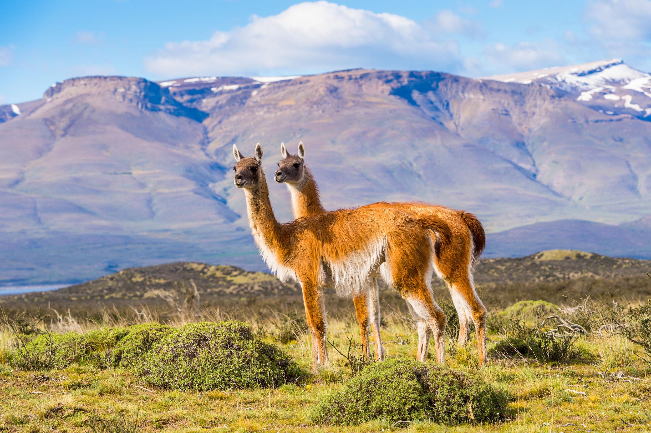 Sfeerimpressie Autorondreis: Uitgebreid Patagonië