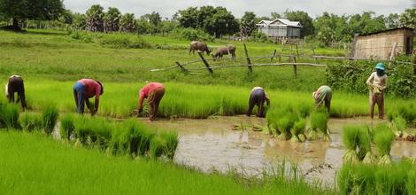 Rondreis Cambodja: Cambodja actief