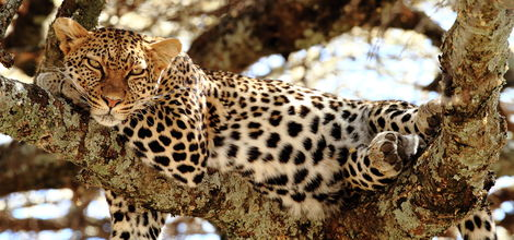 Sfeerimpressie Rondreis Wildparken van Kenia