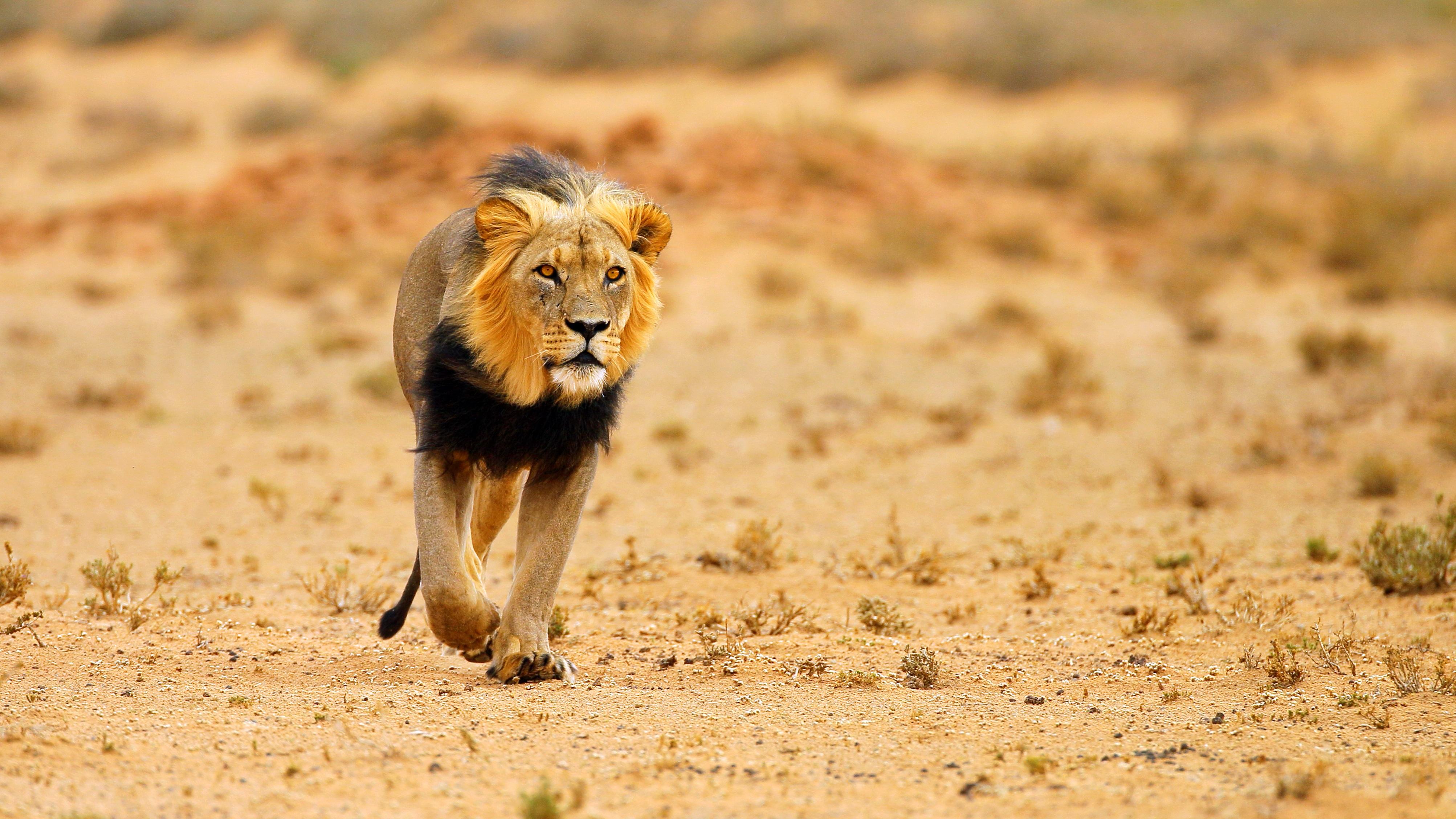 Autorondreis Botswana Buitengewoon Botswana