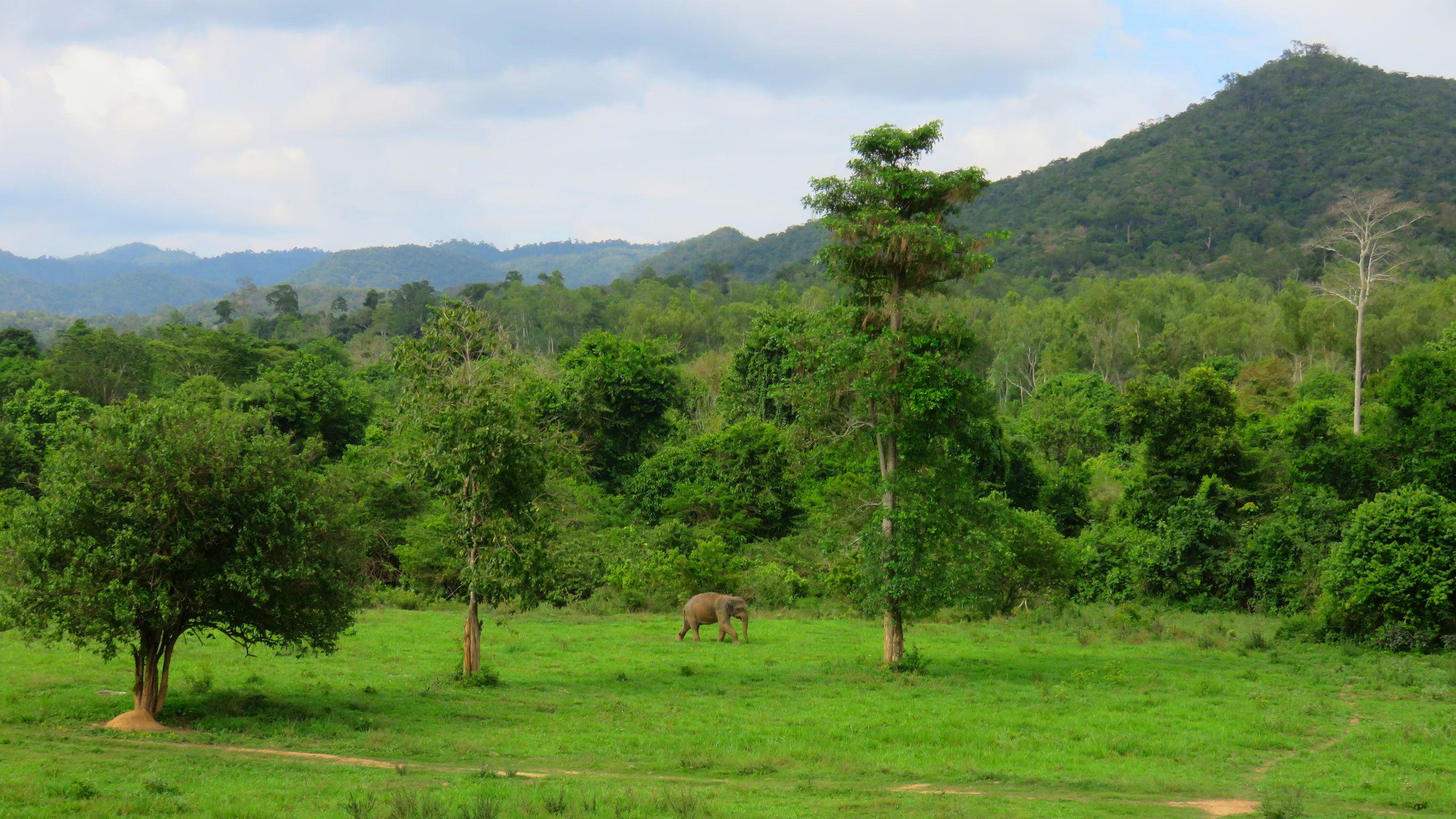 Azie-Thailand-Pranburi-olifant2_2_315807 Thailand