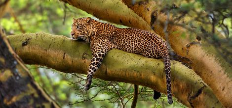 Bouwsteen: Safari Klaserie Natuurreservaat