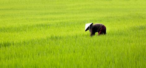 Bouwsteen Landelijk Cambodja