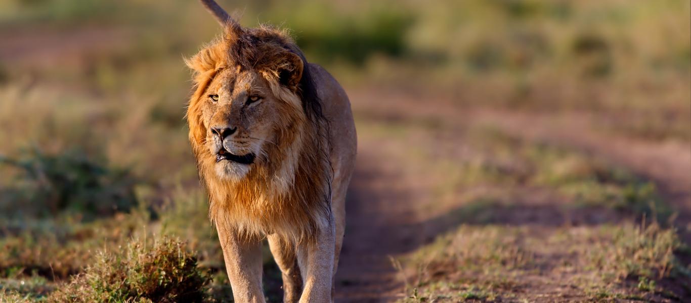 rondreis zuid afrika, betovering in de bush bij van verreSafari Reis Zuid Afrika.htm #15